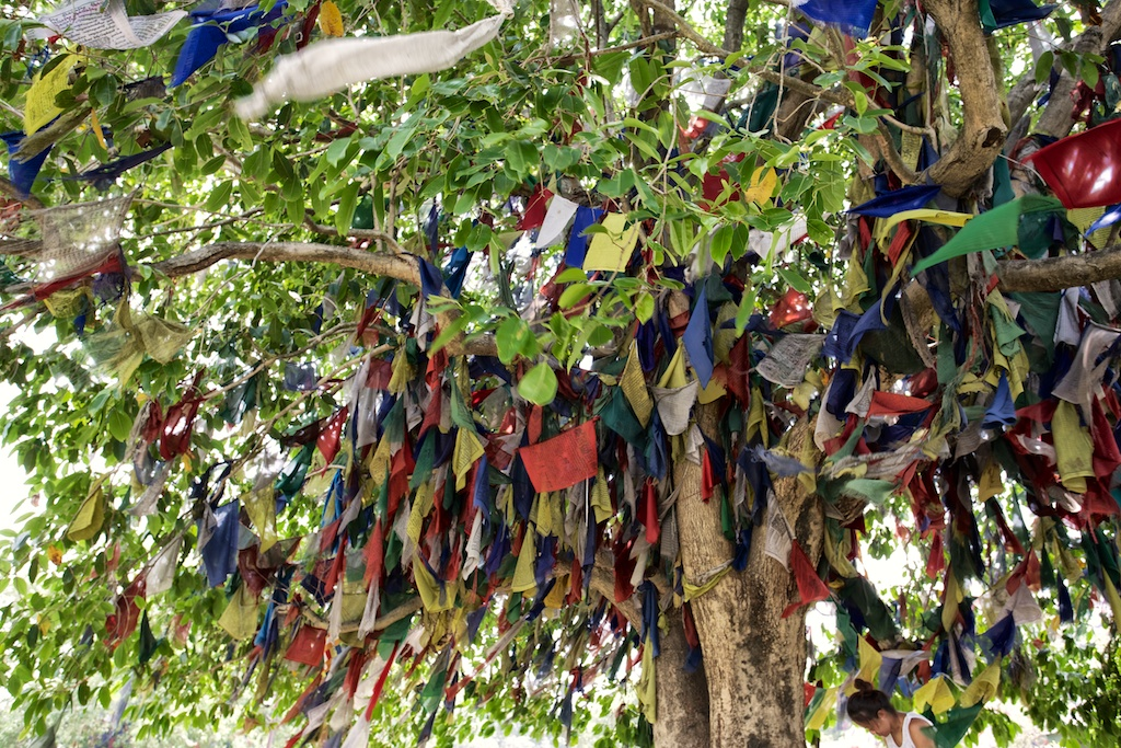 Birthplace of Buddha 10