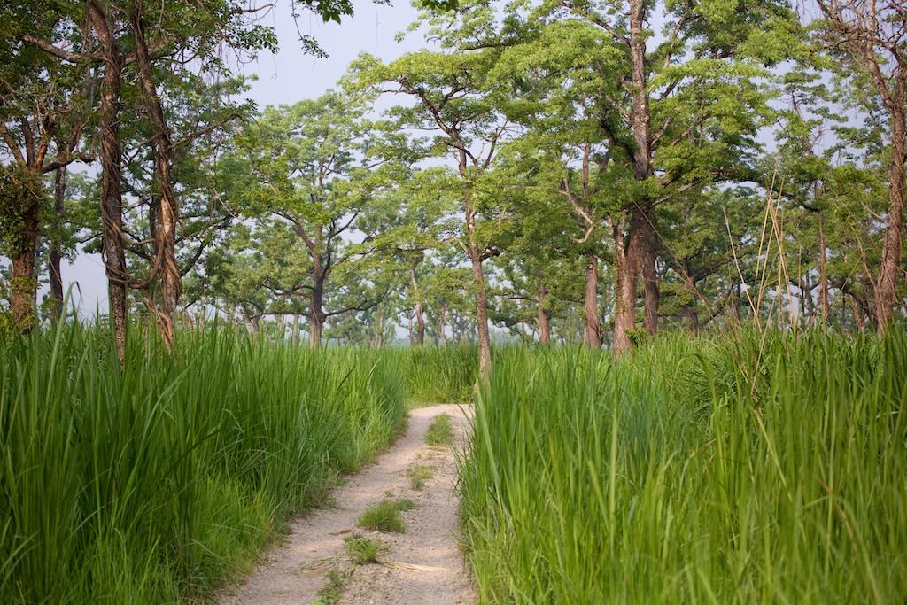 Safari Chitwan National Park 10