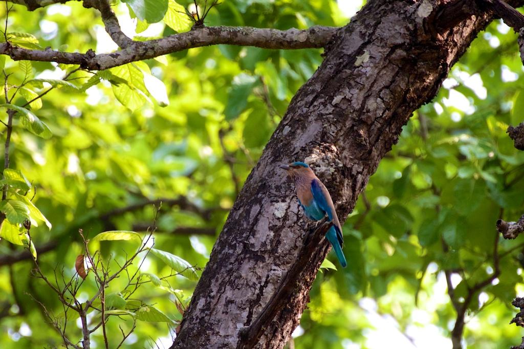 Safari Chitwan National Park 11