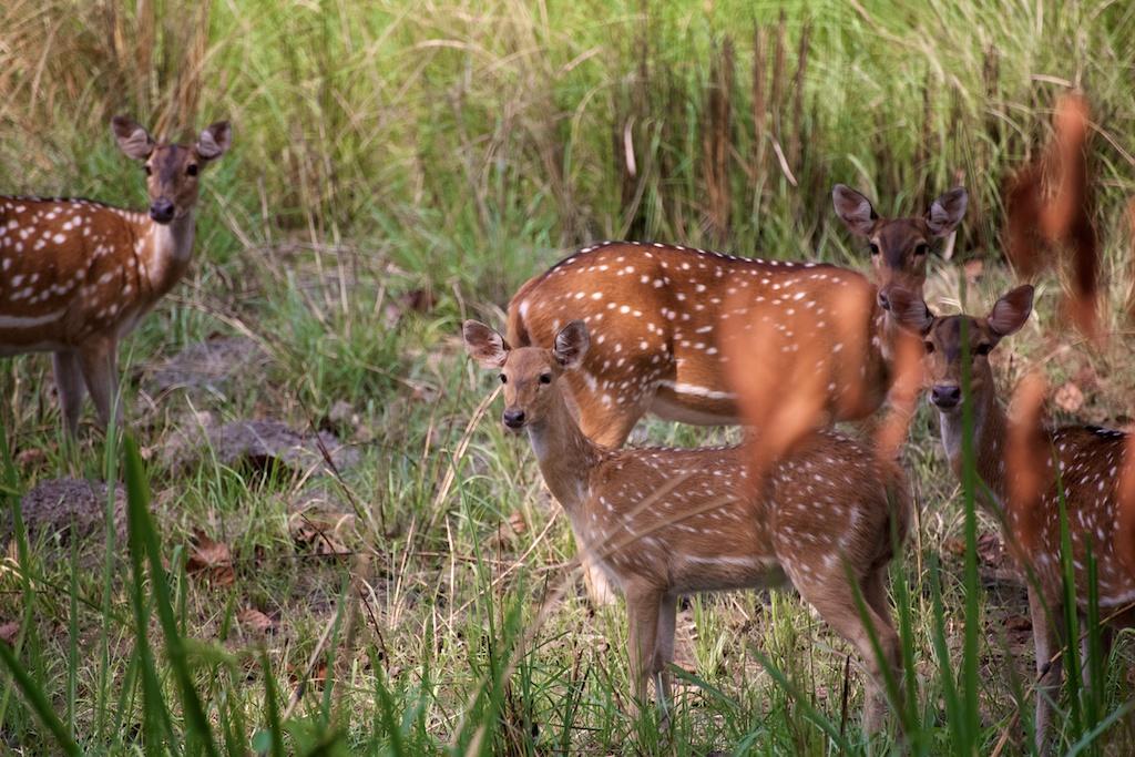Safari Chitwan National Park 15