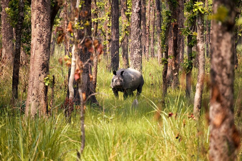 Safari Chitwan National Park 17