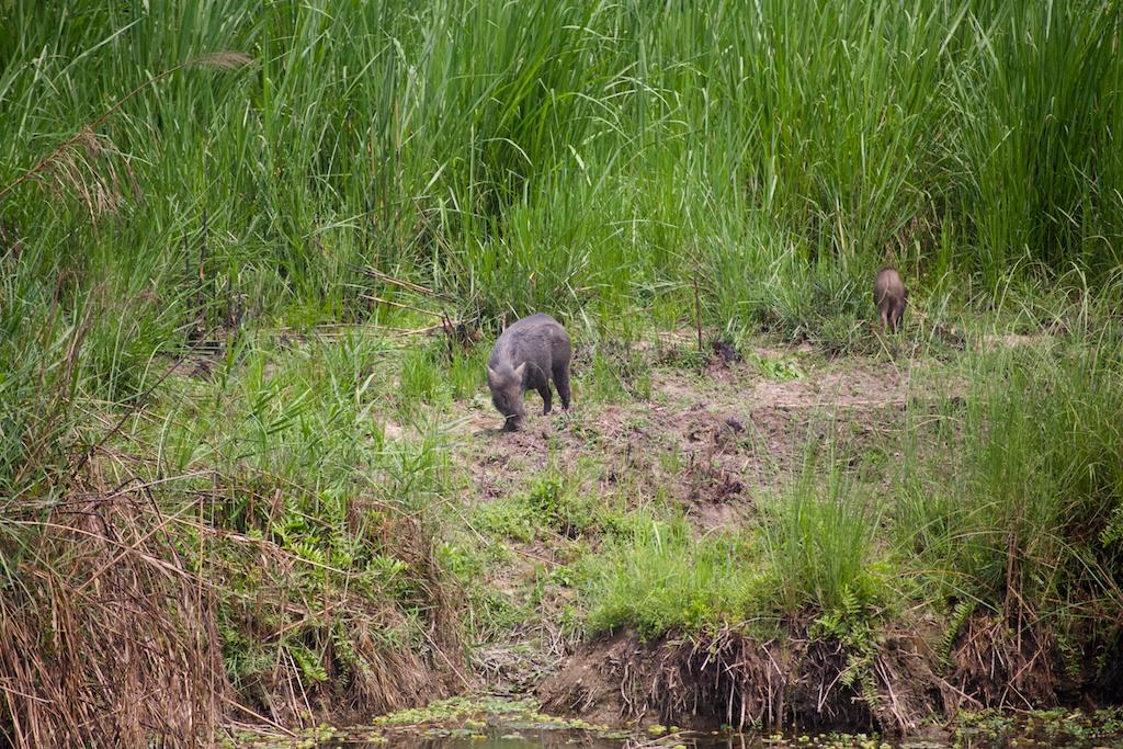 Safari Chitwan National Park 2