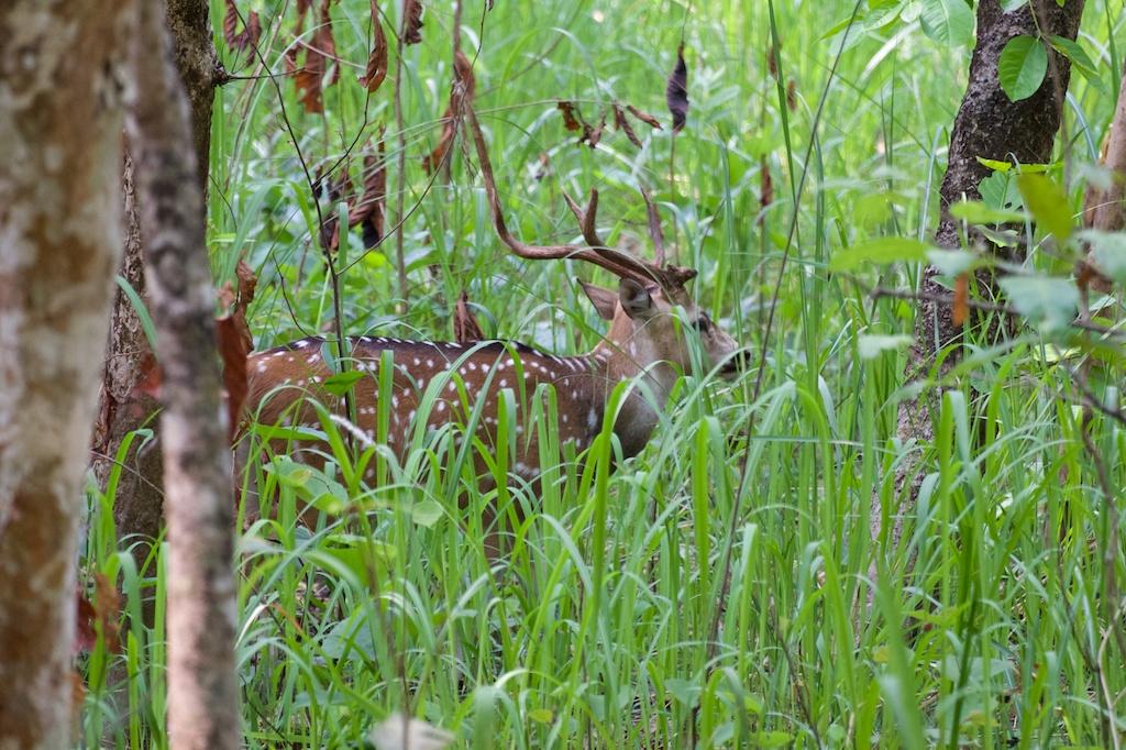 Safari Chitwan National Park 21