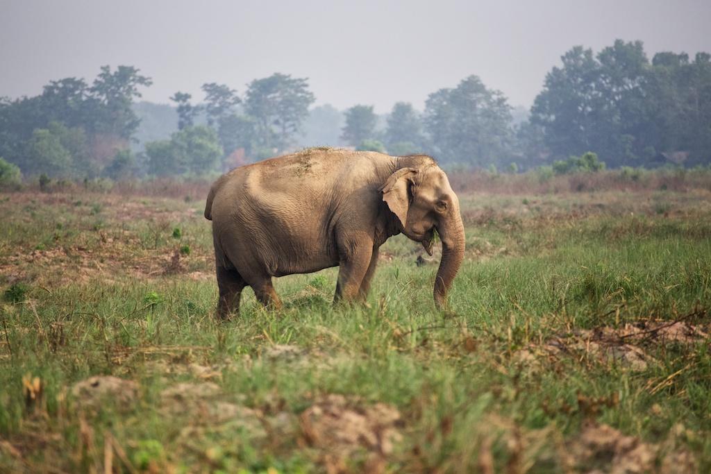 Safari Chitwan National Park 7