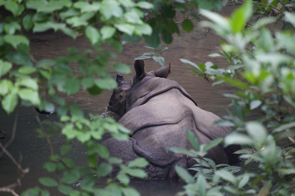 Safari Chitwan National Park 9