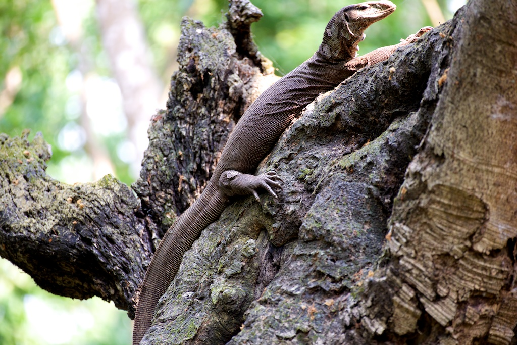Safari Chitwan National Park (1)