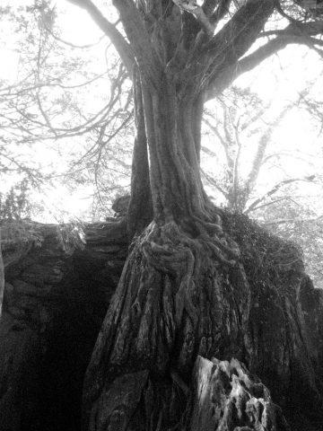 Blarney Stone 3