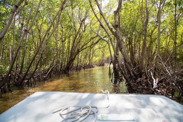 Mangrove Airboat Tour in Everglades National Park with Captain Jacks